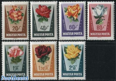 Roses 7v